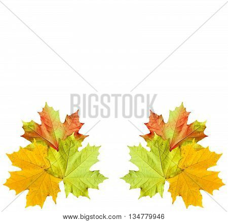 Autumn foliage. Golden Autumn. Colorful autumn leaves
