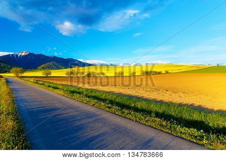 Road in a beautiful land with meadows and blooming field. And snow mountain in background. Slovakia, Central Europe, Liptov