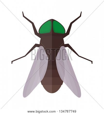 Fly insecct vector isolated
