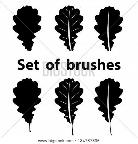 a small set of vector brushes oak leaf