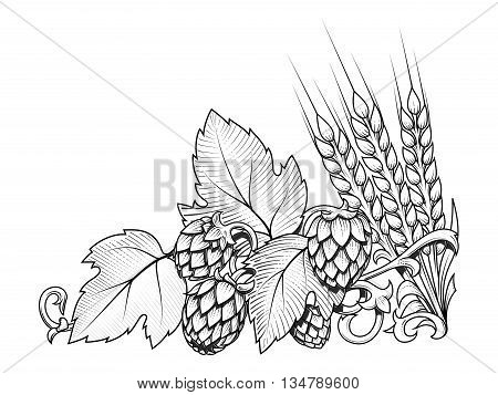 Stylish hop branch and barley hand drawn vector illustration