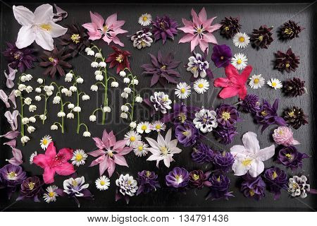 Beautiful colorful spring flowers on a black background.