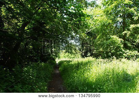 Footpath Going Through The Trees And Grass