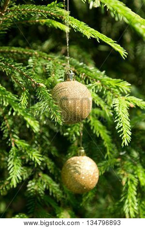 Golden Christmas tree balls on the green Christmas tree branches