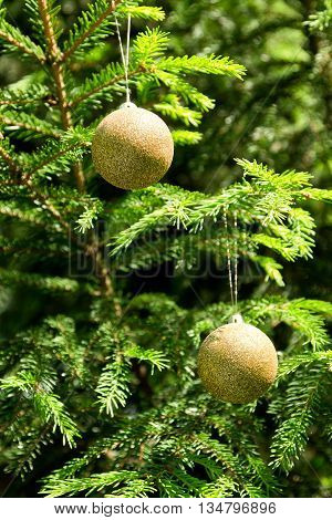 Golden balls - Christmas decoration in real tree