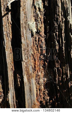 Rotting wood on a barn wall in Seattle.