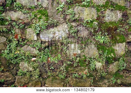 Closeup of stone wall masonry texture overgrown with moss and grass