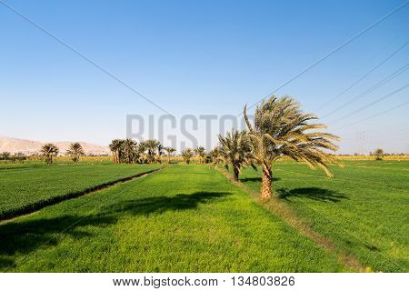 Oasis near Valley of the Kings in Egypt.