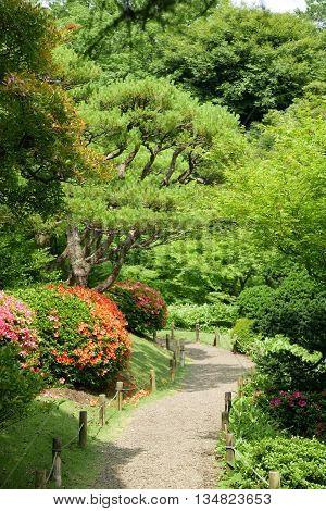 Green Tree,outdoor Flower Plant, In Japanese Zen Garden