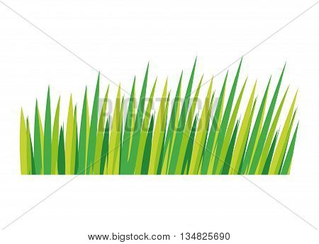 Nature grass represented by green leaves over isolated and flat illustration