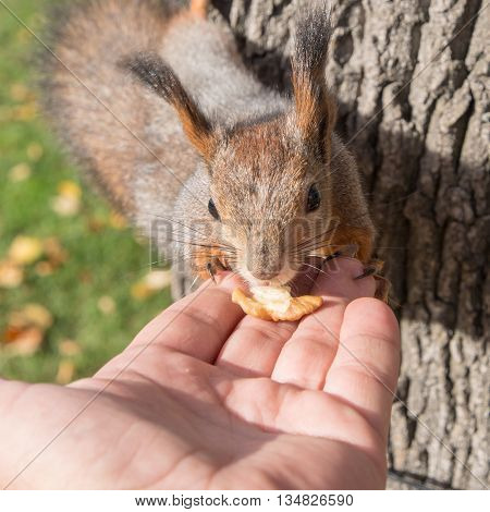 squirrel and nut in a human hand