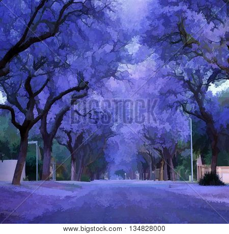 Purple flowers, jacaranda bloomed. Violet jacaranda tree alley.
