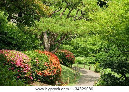 Green Tree,outdoor Flower Plant In Japanese Zen Garden