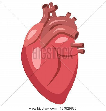 Human heart icon in cartoon style on a white background