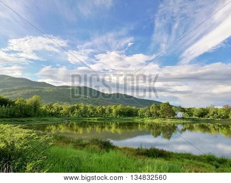 Reflection Of Natural Tree And Sky In A Lake