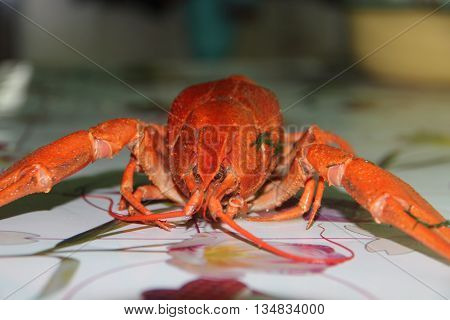 crayfish for beer, boiled crustaceans, crayfish, beer snacks, gourmet food