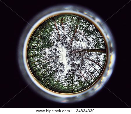 great circular fisheye of the forest treetops