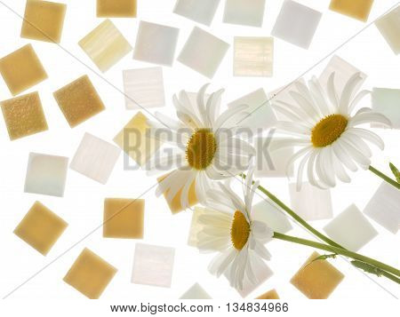 beautiful satin square glass light pearl mosaic and sand with blurred stripes scattered isolated on a white background and three daisies similar in color to the mosaic