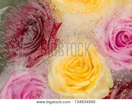 delicate fragile abstraction of beautiful colorful flowers of roses frozen in the clear water and a lot of air bubbles