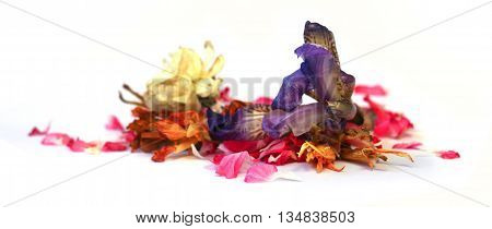 geranium petunia dry delicate flowers leaves and petals of pressed iris marigolds Aquilegia pelargonium isolated on white background scrapbook