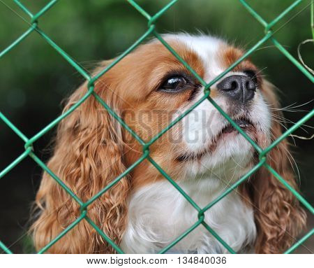 cute dog behind a fence with a wistful looking