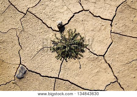 Brown Dry Sand In Sahara Bush Stone Rock