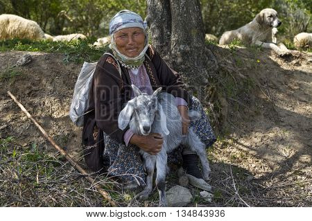 AYDIN, TURKEY - APRIL 4, 2016: An elderly shepherdess rests holidng her goat and looks at me.