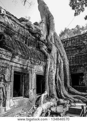 The Ta Prohm temple, Angkor Wat complex, Cambodia