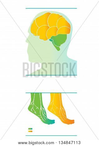 Medical vector info-graphic. Neurology - brain and foots medical graphic