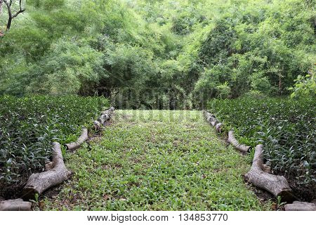 public park with green grass field and perspective to copy space for multi purpose and design nature background.
