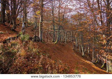 Forester trail in the wild Carpathian Mountains locality.