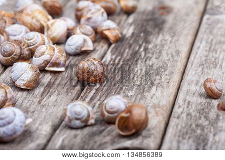 many brown spiral shells on a wooden board decorative macro detailed photo
