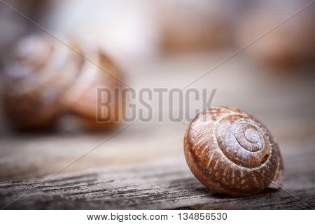 abstract macro photo of a spiral snail on a wooden surface