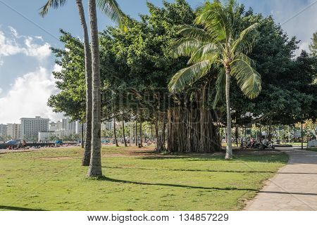 Waikiki,Oahu,Hawaii,USA - May 27, 2014 : Banyan tree with its aerial prop roots along the seafront