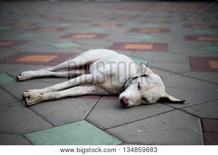 Stray dog is sleeping on the footpath with soft focus