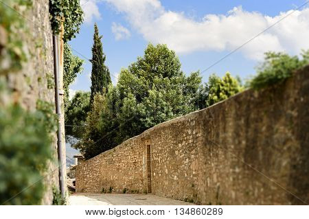 Plant Public Street In Spello