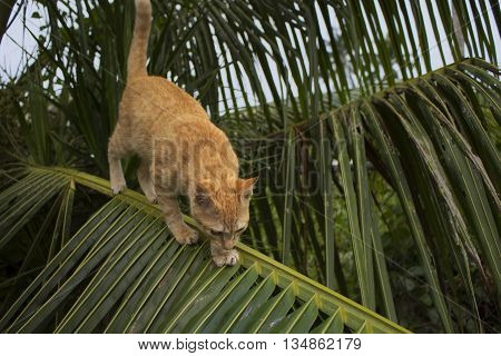 Cat climbing on palm tree. Cute kitty on branch.