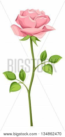 Vector pink rose with stem isolated on a white background.