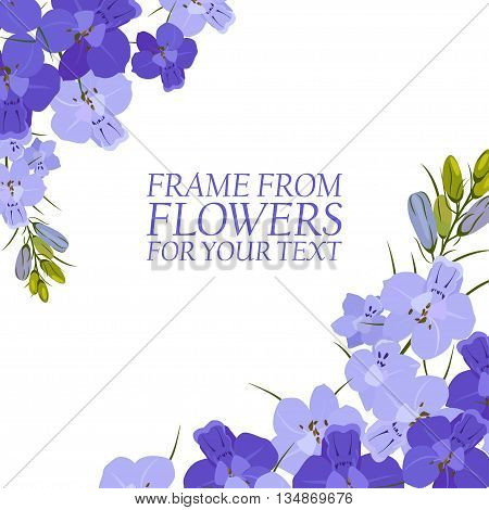Illustration with violet flowers delphinium isolated. On white background.