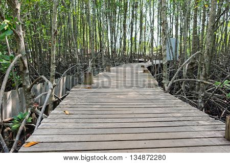 Wooden walkway bridge with mangrove tree in mangrove forest located at Prasae Rayong Thailand.