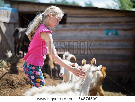 children playing with a goat at farm