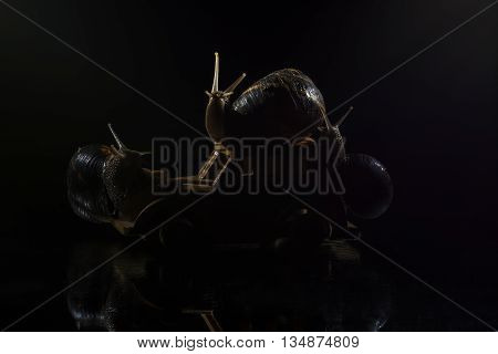 Snails riding toy wooden car isolated on black background
