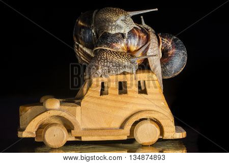 Snails riding a wooden toy car  isolated on black  background