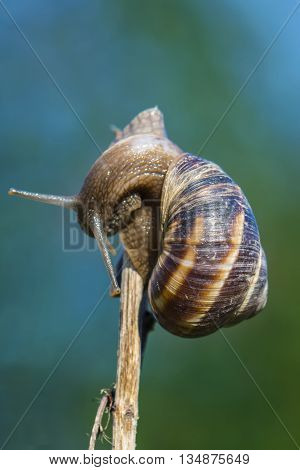 Snail on twig isolated on garden background