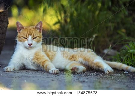 Stray cat laying on street disturbed by camera