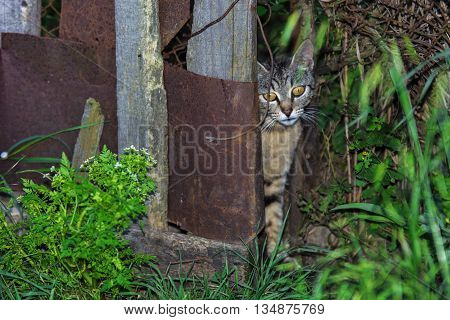 Stray cat hiding behind a gate in the countryside