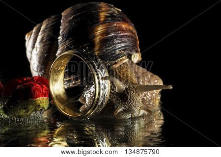 Snail and wedding ring isolated on black  background