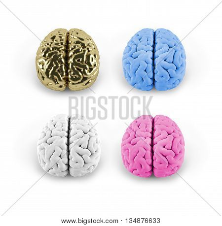 model of the brain of different colors 3D model 3D illustration