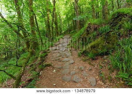 Green temperate forest path in Brittany, France