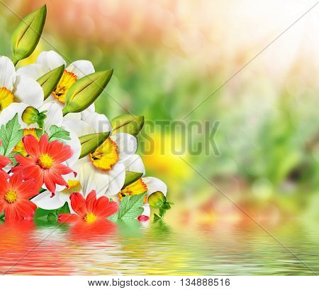 Spring landscape. beautiful spring flowers daffodils. yellow flowers. dahlia